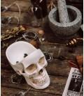 Skull storage compartment